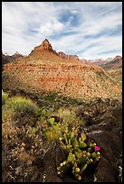Cactus and North Fork. Zion National Park ( color)