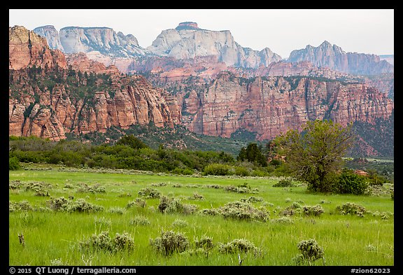Tall grasses and rock towers, Kolob Terraces. Zion National Park (color)