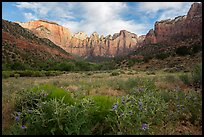 Summer wildflowers and Towers of the Virgin. Zion National Park ( color)
