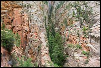 Pocket of forest on steep cliffs. Zion National Park ( color)