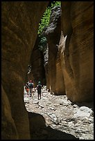 Hiking in narrow dry gorge, Orderville Canyon. Zion National Park ( color)