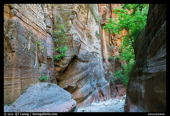 Sandstone canyon and vegetation, Orderville Canyon. Zion National Park (color)