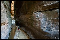 Walking between tall walls, Orderville Canyon. Zion National Park ( color)