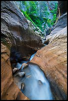 Narrow watercourse in Orderville Canyon. Zion National Park ( color)