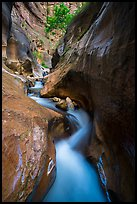 Twisted and narrow watercourse, Orderville Canyon. Zion National Park ( color)