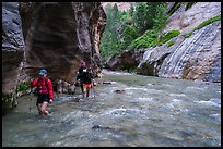 Hikers walking in the Virgin River narrows. Zion National Park ( color)