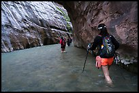 Hikers in Virgin River narrows passage without riverbank. Zion National Park ( color)