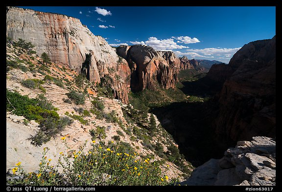 Wildflowers and Zion Canyon from Angels Landing. Zion National Park (color)
