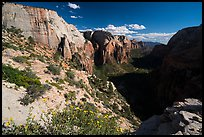 Wildflowers and Zion Canyon from Angels Landing. Zion National Park ( color)