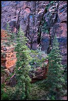 Trees and cliffs, Refrigerator Canyon. Zion National Park ( color)