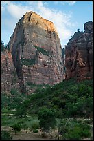 Great White Throne, late afternoon. Zion National Park ( color)