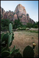 Cactus and Great White Throne. Zion National Park ( color)
