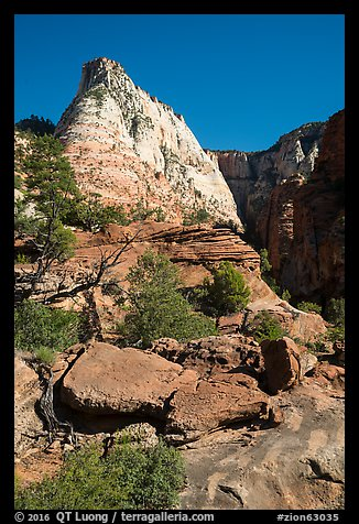 Deertrap Mountain, early morning. Zion National Park (color)