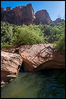 Man jumps from rock into water, Pine Creek. Zion National Park ( color)