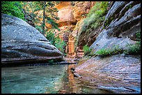 Emerald stream and lush vegetation along Left Fork. Zion National Park ( color)