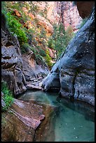 Clear waters and canyon walls along Left Fork. Zion National Park ( color)
