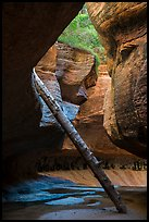 Log propped against canyon walls, Upper Subway. Zion National Park ( color)