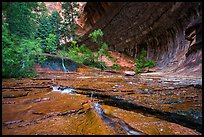 Red travertine terraces and alcove in the spring. Zion National Park ( color)