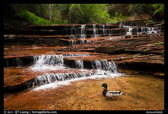 Duck and Archangel Falls. Zion National Park (color)