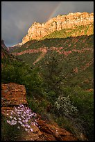 Rainbow over South Guardian Angel. Zion National Park ( color)