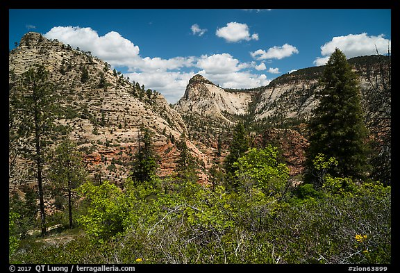 Zion Canyon rim view with vegetation and white cliffs. Zion National Park (color)