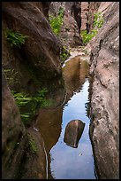 Lush pool in narrows, Behunin Canyon. Zion National Park ( color)