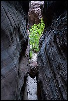 Chockstone wedged in narrows, Behunin Canyon. Zion National Park ( color)