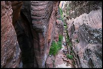 Narrows from above, Behunin Canyon. Zion National Park ( color)