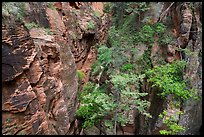 Trees and shurbs in Behunin Canyon. Zion National Park ( color)