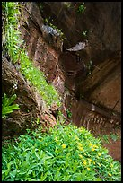 Hanging gardens in alcove near Lower Emerald Pool. Zion National Park ( color)
