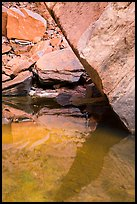 Reflections, Upper Emerald Pool. Zion National Park ( color)