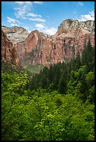 Zion Canyon from Upper Emerald Pool. Zion National Park ( color)