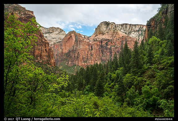 Upper Emerald Pool greenery frames Zion Canyon. Zion National Park (color)