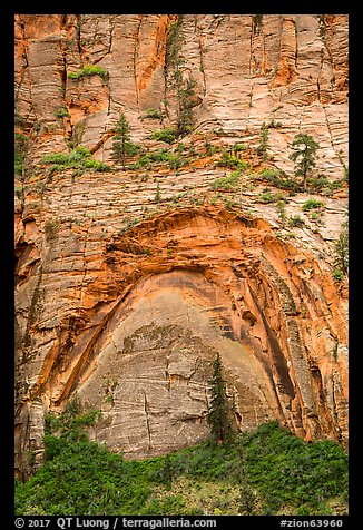 Large alcove. Zion National Park (color)