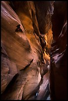 Flash-flood Sculptured slot canyon walls, Pine Creek Canyon. Zion National Park ( color)