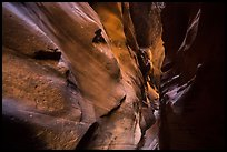 Narrow canyon walls sculptured by flash floods, Pine Creek Canyon. Zion National Park ( color)