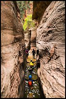 Canyoneers wade through narrows, Upper Left Fork. Zion National Park, Utah ( color)