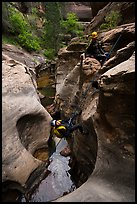 Canyonneer rappels into the Subway. Zion National Park, Utah ( color)