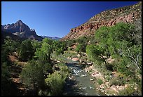 Virgin river and Watchman, spring morning. Zion National Park, Utah, USA.