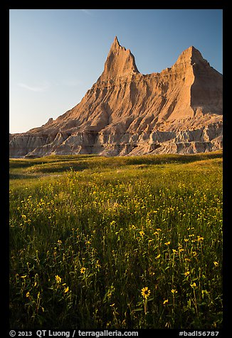 Sunflowers and pointed pinnacles at sunset. Badlands National Park (color)