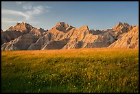 Grasses with summer flowers and buttes at sunset. Badlands National Park ( color)