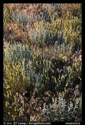 Mixed grasses, Stronghold Unit. Badlands National Park (color)