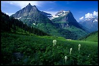 Bear grass, Mt Oberlin and Cannon Mountain from Big Bend. Glacier National Park, Montana, USA.