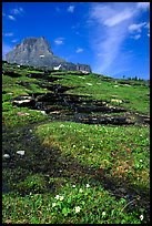 Stream at hanging gardens, Logan pass. Glacier National Park, Montana, USA.