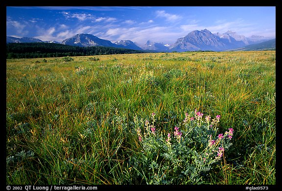 Prairie and Lewis range. Glacier National Park (color)