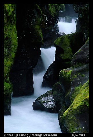 Stream cascading in narrow gorge, Avalanche creek. Glacier National Park (color)