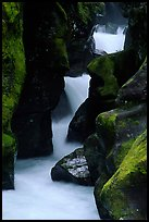 Stream cascading in narrow gorge, Avalanche creek. Glacier National Park, Montana, USA. (color)