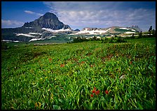 Alpine meadow with wildflowers and triangular peak, Logan Pass. Glacier National Park, Montana, USA. (color)