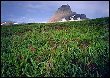 Alpine meadow, wildflowers, and Clemens Mountain. Glacier National Park, Montana, USA. (color)