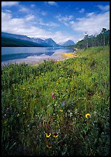Wildflowers and Sherburne Lake, morning. Glacier National Park, Montana, USA.